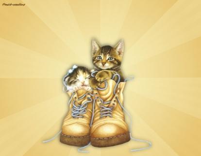 chatonschaussures
