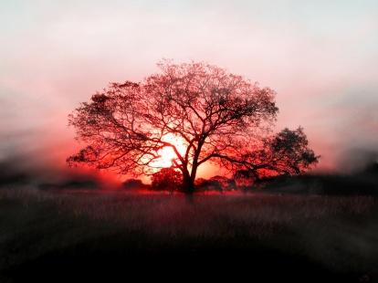 arbre-couche-de-soleil