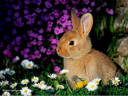 real_8756_rabbits-000