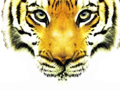 tigre_entree