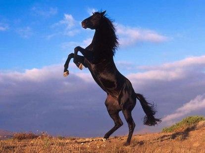 5578_2176_cheval_017_jpg
