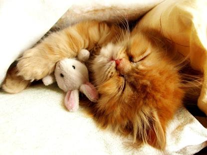 chat-et-son-doudou-lapin