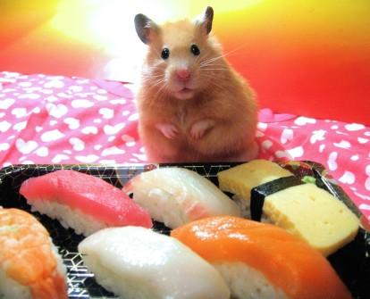 hamster_01