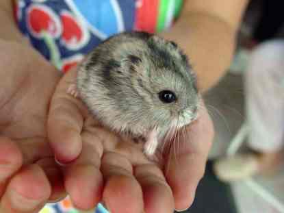 Hamster_057eue