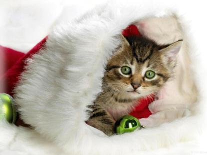 Chat de Noël (1024 x 768)